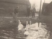 amelan-1958