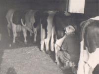 Herre-v-d-Werf-aan-het-melken-19.