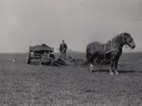 Jaap-Wieringa-dongje-1950