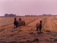 Yme-v-d-Valk-1979-yn-het-hea..
