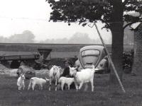 suderdijk-2-jouswierstate-geiten