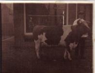 waltawei-1940-willem-voor-de-slagerij